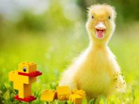 the duck LegoSeriousPlay